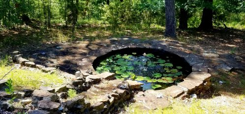 Small pond with lilly pads
